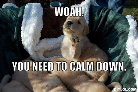 Calm Down And Meme - woah you need to calm down funny memes pinterest