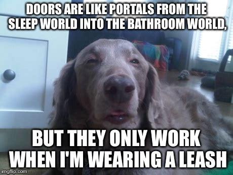 High Dog Meme - pin high dog meme on pinterest