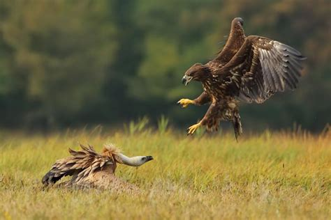 being the bird of prey attacking the competition with