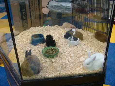how much for at petco image gallery petco rabbits