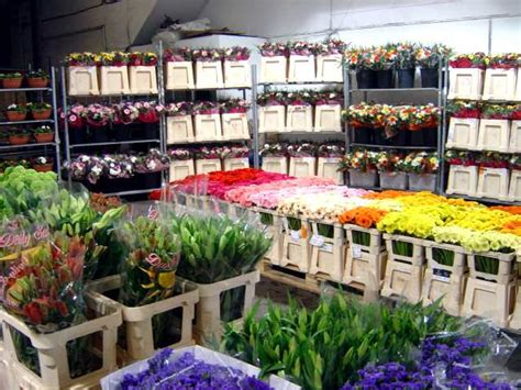 Wholesale Florist by Wholesale Flowers In Liverpool And West Liverpool