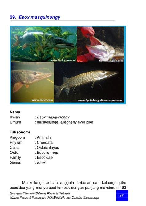 yang dilarang di indonesia jenis ikan yang dilarang masuk ke indonesia