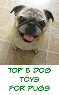 are pugs hypoallergenic dogs pets their products on hypoallergenic food for dogs and your