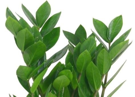 green house plant identification attractive house plants 2015 april 2012