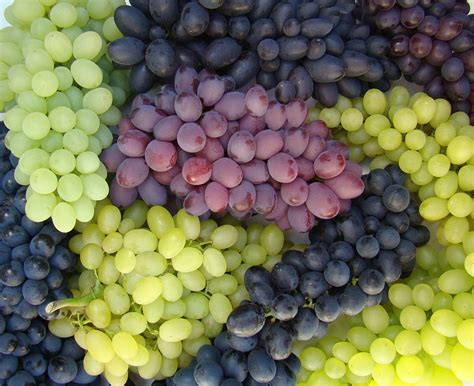 lada uva australia recibe primer cargamento de uva de mesa mexicana