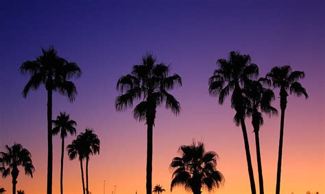 colorful palm trees colorful tropical palm tree sunset photograph by bo