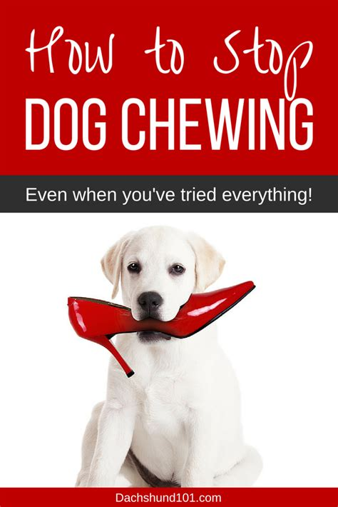 when do puppies stop chewing everything how to stop a chewing stop from chewing in 3 easy steps