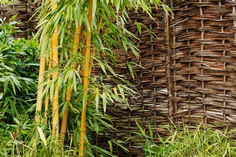 bamboo plant at garden free stock photo public domain pictures