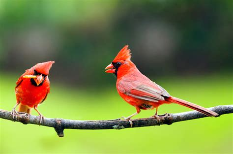 how to attract birds to your backyard how to attract birds to your yard conservation