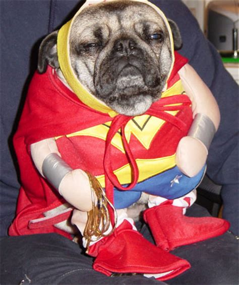 pug costumes for dogs pictures of dogs and puppies cliptank
