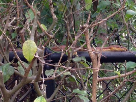 Types Of Garden Snakes by Type Of Snake Help Garden Move Eat Miami Florida
