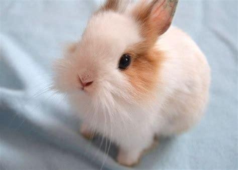 kumpulan gambar kelinci lucu dan imut kumpulan gambar