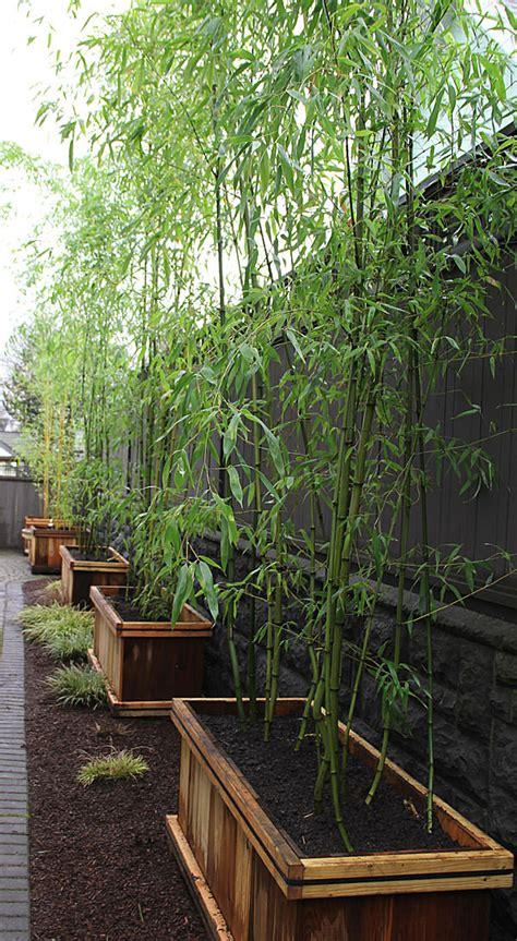 Planter Screen by Need Privacy Diy Garden Privacy Ideas The Garden Glove