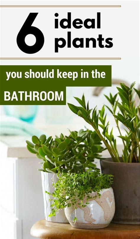 indoor plants  bathroom feng shui location house