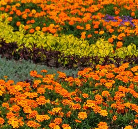 Types Of Garden Flowers Garden Types Howstuffworks