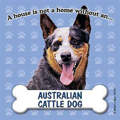 Australia Address Search Dogs News Contact Search Cart Australian Cattle Breed Breeds Picture