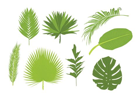 palm leaf pattern vector palm leaves vectors download free vector art stock