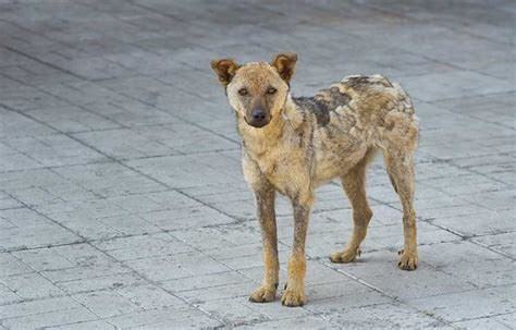 how to a stray how to protect yourself from stray dogs while walking
