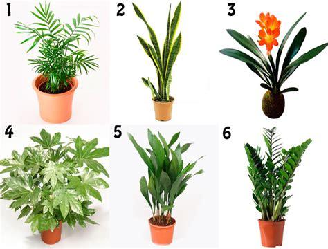 cuidado plantas de interior planta interior resistente dise 241 os arquitect 243 nicos