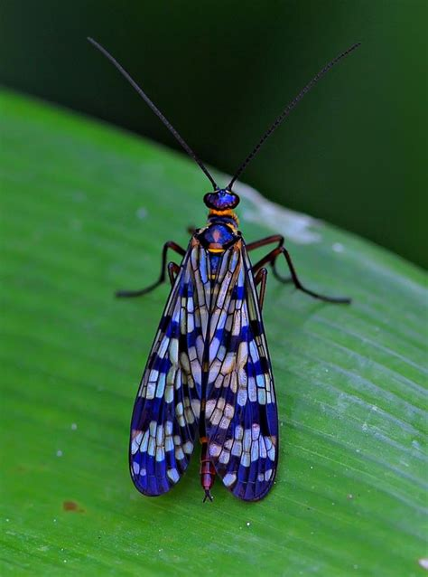 746 best bugs dragonflies insects images on pinterest