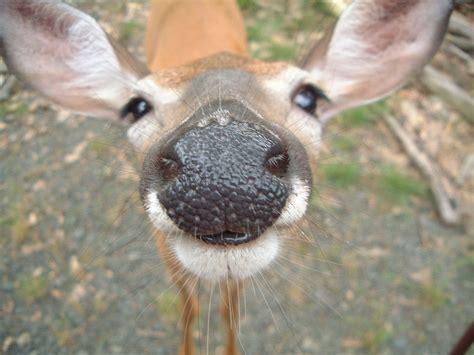 zoo animals cute deer