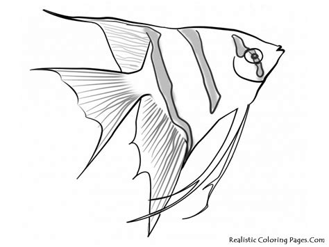 realistic underwater coloring pages sea life coloring pages realistic coloring pages