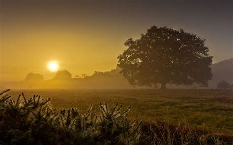landscapes fields grass trees dawn morning sunrise sunset