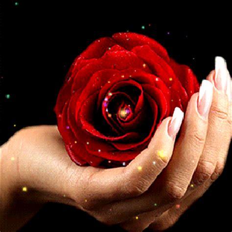 imagenes de rosas multicolores flores belas e encantadoras rosas