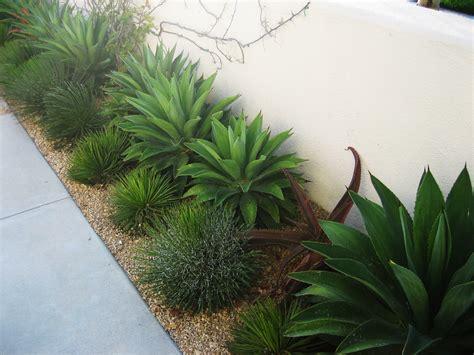 orange county landscape architect agave shrubs
