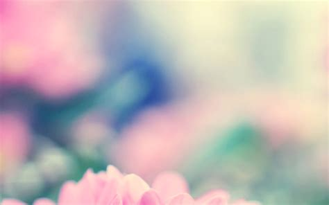 mc wallpaper boo  flower pink blurred papersco