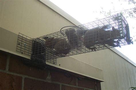 Bat Trap One Way Door by Wildlife Exclusion Using One Way Doors
