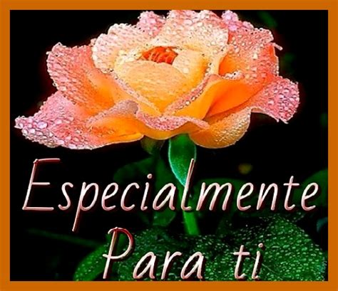 imagenes con frases bonitas y rosas frases bonitas de amor con flores para whatsapp