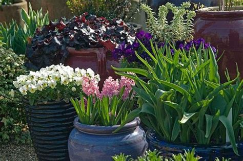 garden containers uk how to get the best from your container plants rhs gardening