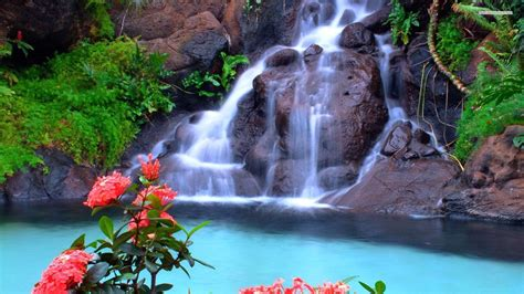 beautiful waterfalls with flowers amazing waterfalls pesquisa google the world s most
