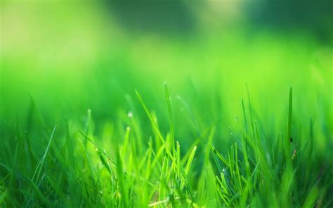 green grass field wallpapers hd wallpapers id