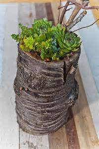 Large Succulent Planter by Large Re Beam Planter On Cherry Stump With Succulent