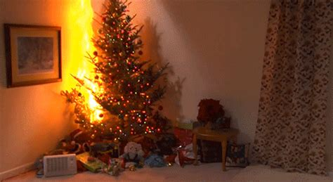 tree on fire gifs find share on giphy