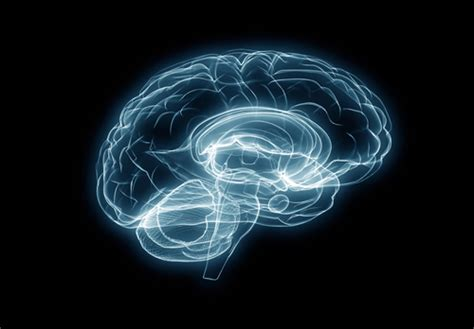 Detoxing The Csf by Detoxify Your Brain By Hacking Your Glymphatic System