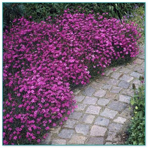 small indoor flowering plants
