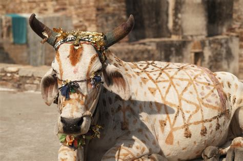 Sacred Mba Ranking by Motivation It S Time To Kill Those Sacred Cows