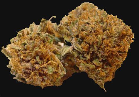 black strain black magic kush marijuana strain reviews allbud