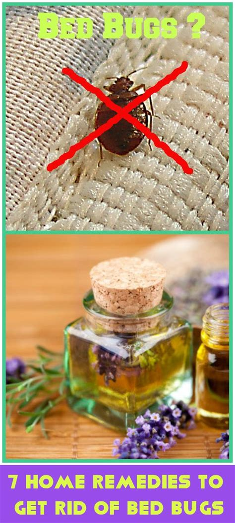 ideas  bed bug remedies  pinterest bed bug spray bed bug trap  bed bugs