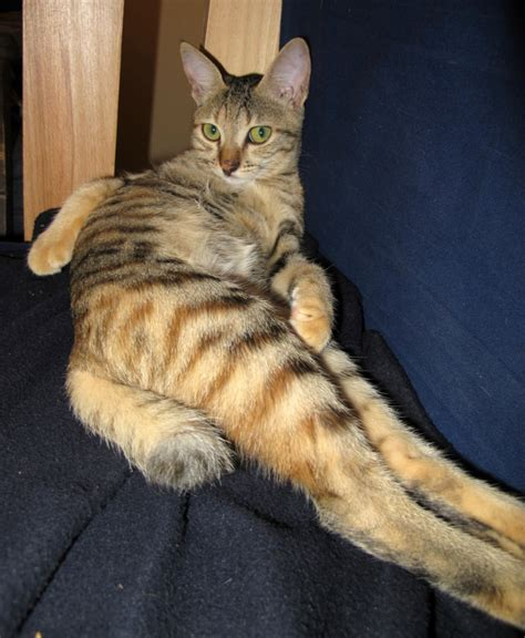 cat pees on couch would you feed your cat over the internet catster