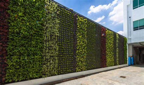 imagenes muros verdes muros verdes descubre fundaci 243 n unam