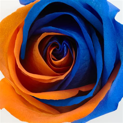 blue and orange 1000 images about wedding blue orange on