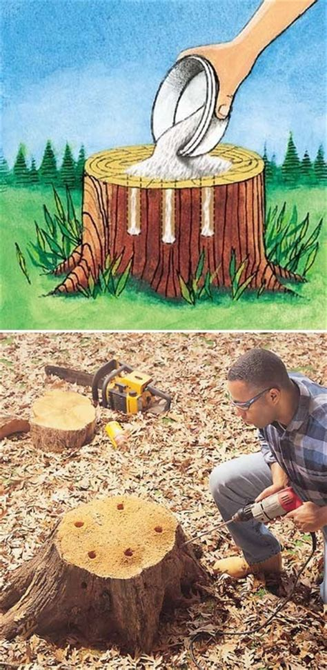 the backyard garden how to remove tree stumps