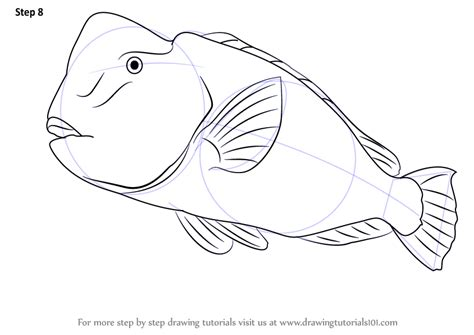 coloring pages of parrot fish step by step how to draw a humphead parrotfish