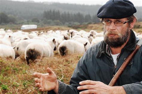 le berger near me monts d arr 233 e attaques de brebis le coup de gueule du