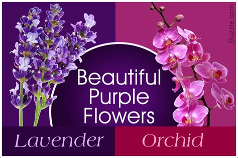 purple flower names enlisted   beautiful photo gallery
