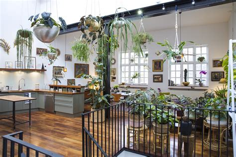 jamies jungle  home  houseplants  london